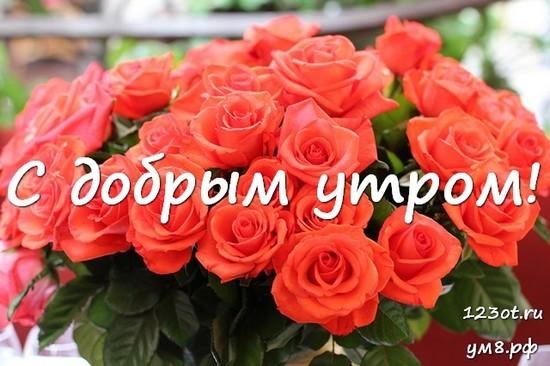 Доброго утра и хорошего дня, красивая открытка, картинка с природой, с цветами для женщины, для жены скачать бесплатно! скачать открытку бесплатно   123ot