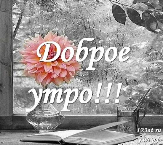 Доброго утречка, красивая картинка, фотография с цветами для женщины, для жены скачать бесплатно! скачать открытку бесплатно   123ot