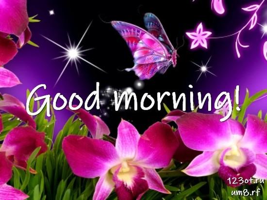 Доброго утречка, красивая картинка, фотография с цветами для женщины, для жены скачать бесплатно! скачать открытку бесплатно | 123ot