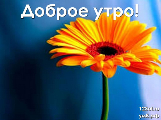 Доброго утречка, красивая картинка, фотография с цветочками (цветы) для девушки, женщины скачать! скачать открытку бесплатно   123ot