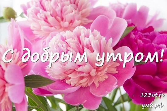 Доброго утречка, красивая картинка, фотография с цветочками (цветы) для девушки, женщины скачать! скачать открытку бесплатно | 123ot
