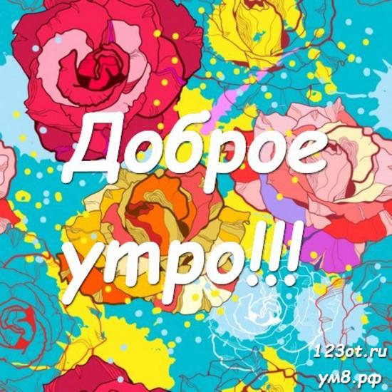 Доброго утречка, красивая картинка, фотография с природой, с цветами девушке, женщине отправить на вацап! скачать открытку бесплатно | 123ot