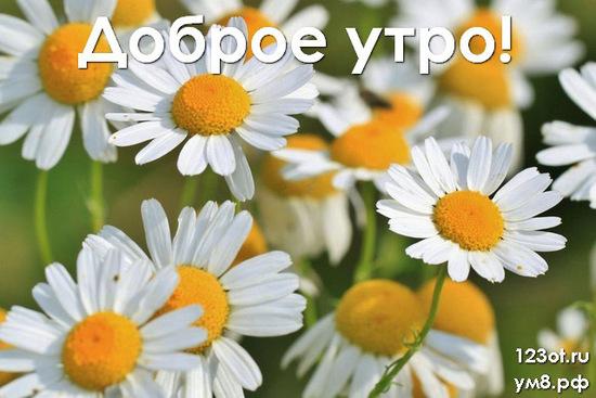 Доброго утречка, красивая картинка, фотография с природой, с цветами для девушки, женщины скачать! скачать открытку бесплатно | 123ot