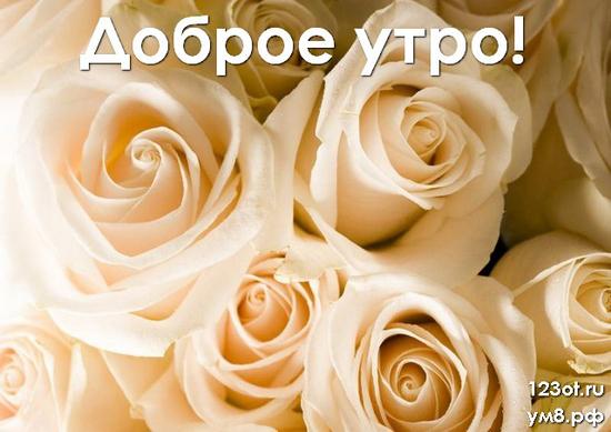 Доброго утречка, красивая открытка, картинка с цветами женщине, жене скачать онлайн! скачать открытку бесплатно | 123ot