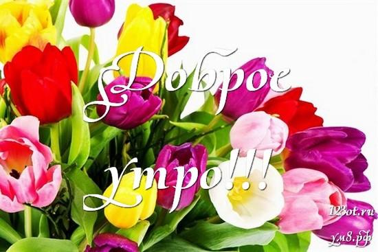 Доброго утречка, красивая открытка, картинка с цветочками (цветы) для женщины, для жены скачать бесплатно! скачать открытку бесплатно | 123ot