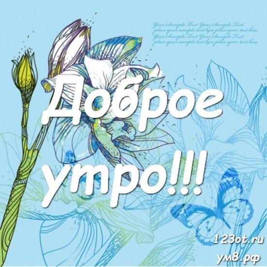Доброго утречка, красивая открытка, картинка с цветочками (цветы) женщине, жене скачать онлайн! скачать открытку бесплатно | 123ot