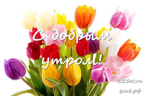 Доброго утречка, красивая открытка, картинка с красивыми цветами женщине, жене скачать онлайн! скачать открытку бесплатно | 123ot