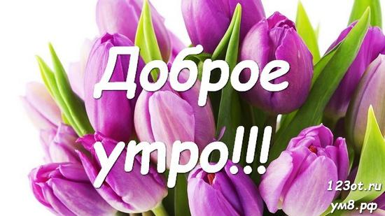 Доброго утречка, красивая открытка, картинка с природой, с цветами для девушки, женщины скачать! скачать открытку бесплатно | 123ot