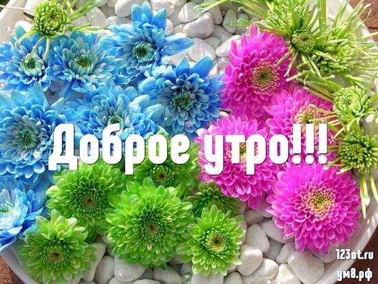 Доброго утречка, красивая открытка, картинка с природой, с цветами для женщины, для жены скачать бесплатно! скачать открытку бесплатно | 123ot