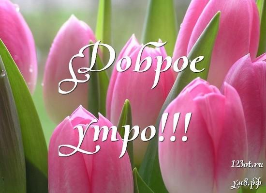 Красивого утра, красивая картинка, фотография с цветочками (цветы) для девушки, женщины скачать! скачать открытку бесплатно   123ot
