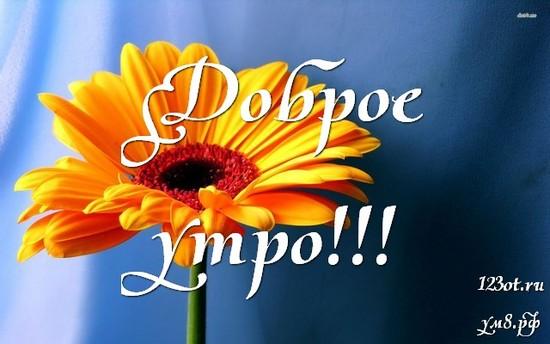 Красивого утра, красивая картинка, фотография с цветочками (цветы) для женщины, для жены скачать бесплатно! скачать открытку бесплатно | 123ot