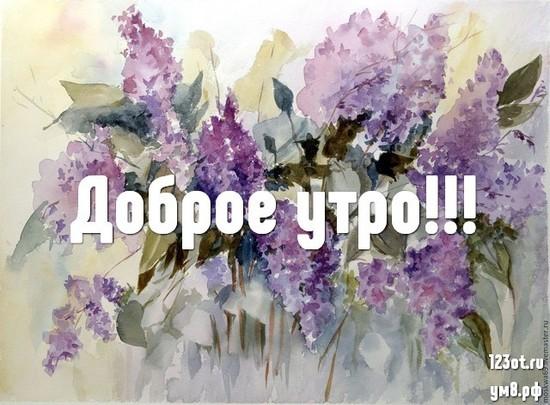Красивого утра, красивая картинка, фотография с красивыми цветами девушке, женщине отправить на вацап! скачать открытку бесплатно | 123ot