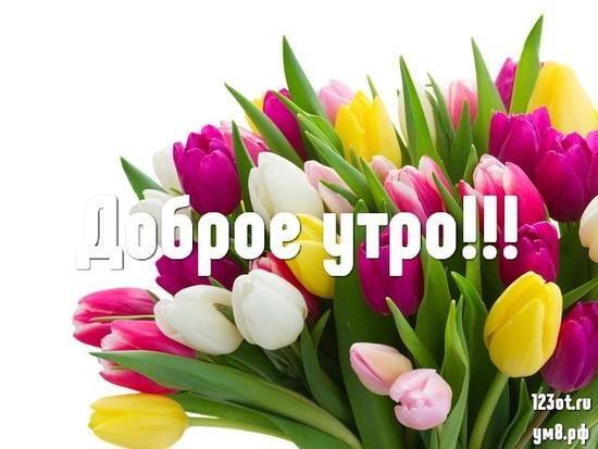 Красивого утра, красивая картинка, фотография с красивыми цветами для женщины, для жены скачать бесплатно! скачать открытку бесплатно   123ot