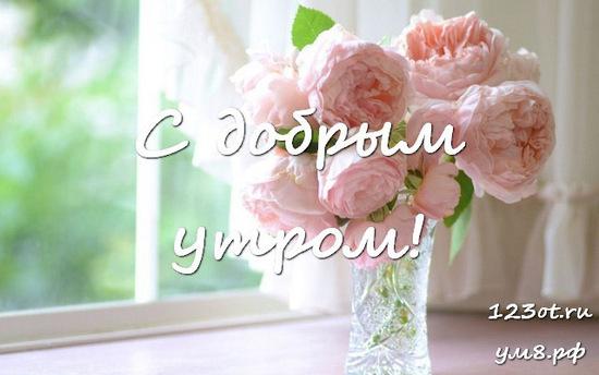 Красивого утра, красивая картинка, фотография с природой, с цветами девушке, женщине отправить на вацап! скачать открытку бесплатно | 123ot