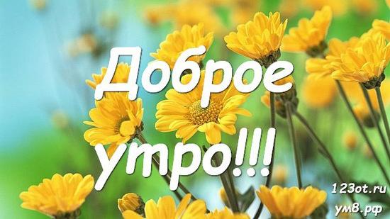 Красивого утра, красивая картинка, фотография с природой, с цветами для девушки, женщины скачать! скачать открытку бесплатно | 123ot