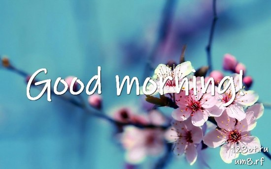 Красивого утра, красивая открытка, картинка с цветами женщине, жене скачать онлайн! скачать открытку бесплатно | 123ot