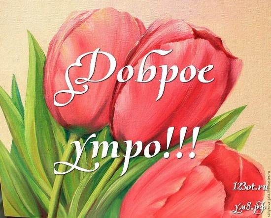 Красивого утра, красивая открытка, картинка с цветочками (цветы) девушке, женщине отправить на вацап! скачать открытку бесплатно   123ot
