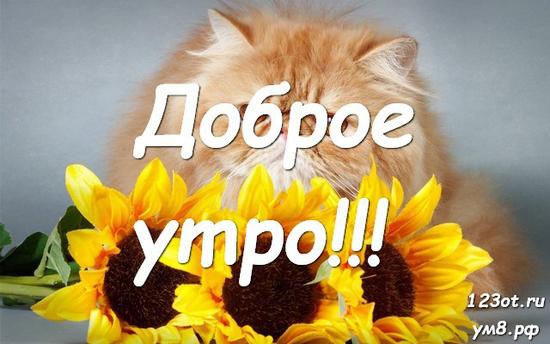 Красивого утра, красивая открытка, картинка с красивыми цветами для женщины, для жены скачать бесплатно! скачать открытку бесплатно   123ot