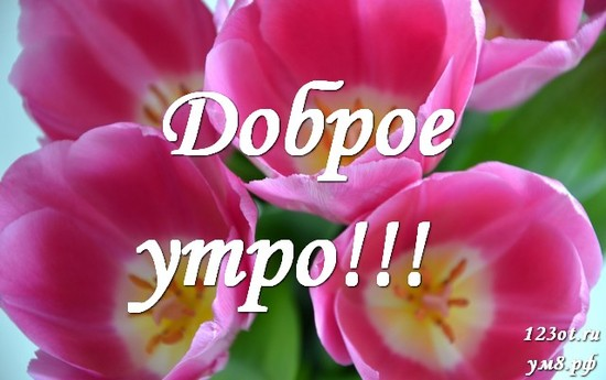 Красивого утра, красивая открытка, картинка с красивыми цветами женщине, жене скачать онлайн! скачать открытку бесплатно | 123ot
