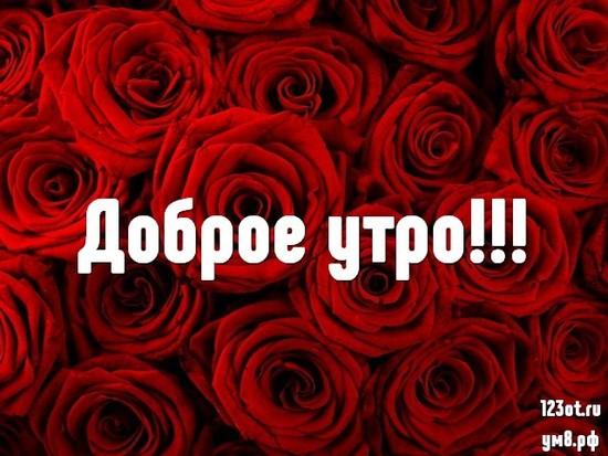 Прекрасного утра, красивая картинка, фотография с цветами для женщины, для жены скачать бесплатно! скачать открытку бесплатно   123ot