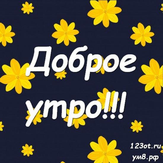 Прекрасного утра, красивая картинка, фотография с цветочками (цветы) для девушки, женщины скачать! скачать открытку бесплатно | 123ot
