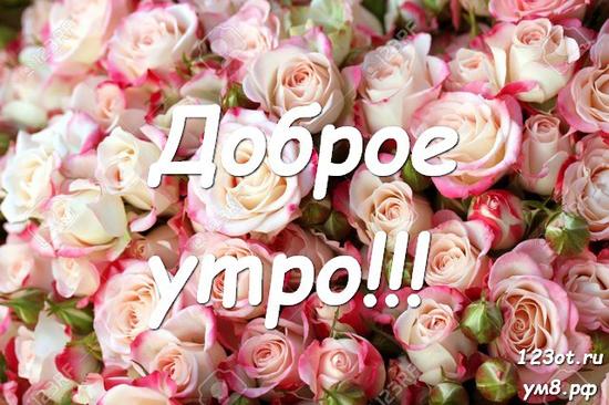 Прекрасного утра, красивая картинка, фотография с цветочками (цветы) для женщины, для жены скачать бесплатно! скачать открытку бесплатно | 123ot