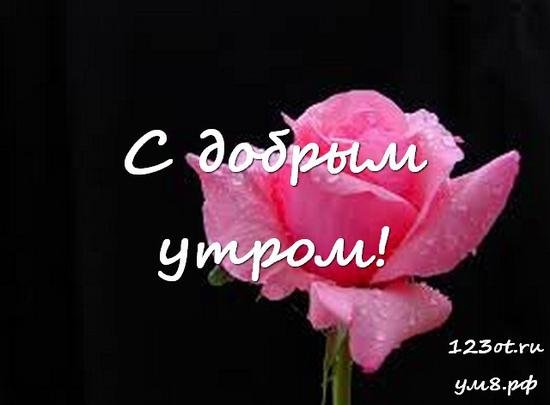 Прекрасного утра, красивая картинка, фотография с цветочками (цветы) женщине, жене скачать онлайн! скачать открытку бесплатно   123ot