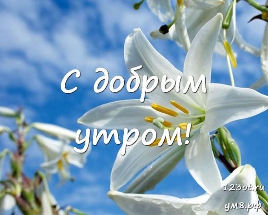 Прекрасного утра, красивая картинка, фотография с цветочками (цветы) женщине, жене скачать онлайн! скачать открытку бесплатно | 123ot