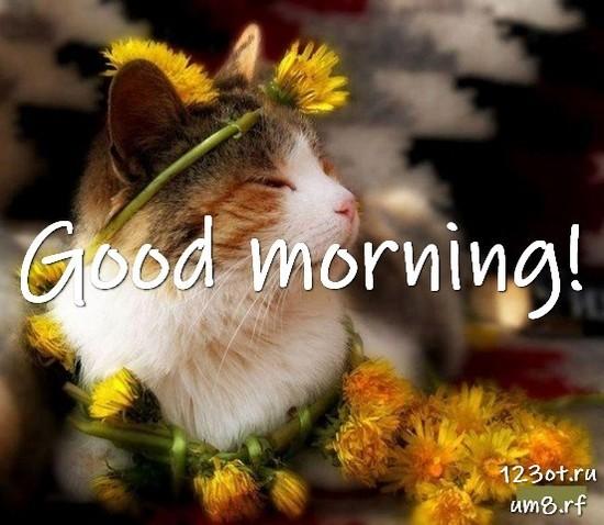 Прекрасного утра, красивая картинка, фотография с красивыми цветами для женщины, для жены скачать бесплатно! скачать открытку бесплатно | 123ot