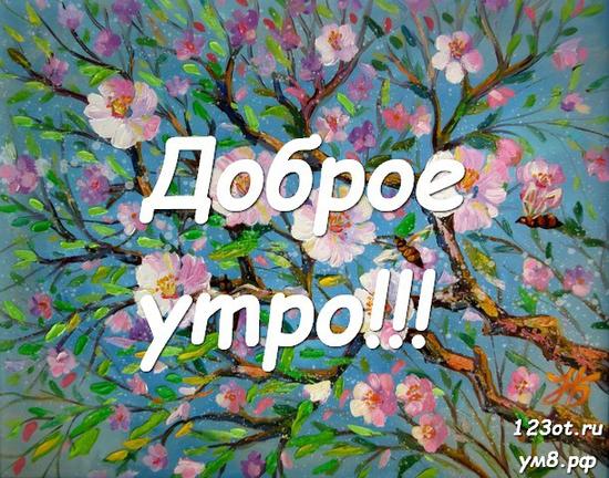 Прекрасного утра, красивая картинка, фотография с красивыми цветами женщине, жене скачать онлайн! скачать открытку бесплатно   123ot