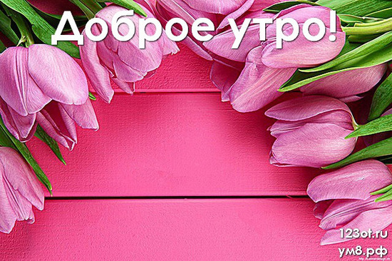 Прекрасного утра, красивая картинка, фотография с природой, с цветами девушке, женщине отправить на вацап! скачать открытку бесплатно | 123ot