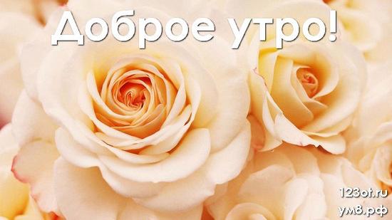 Прекрасного утра, красивая картинка, фотография с природой, с цветами женщине, жене скачать онлайн! скачать открытку бесплатно | 123ot