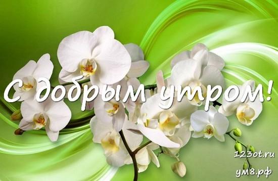Прекрасного утра, красивая открытка, картинка с цветочками (цветы) девушке, женщине отправить на вацап! скачать открытку бесплатно | 123ot