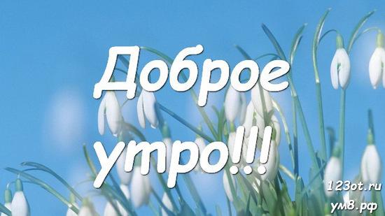 Прекрасного утра, красивая открытка, картинка с цветочками (цветы) девушке, женщине отправить на вацап! скачать открытку бесплатно   123ot