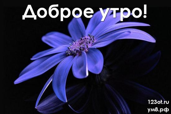 Прекрасного утра, красивая открытка, картинка с цветочками (цветы) для девушки, женщины скачать! скачать открытку бесплатно | 123ot