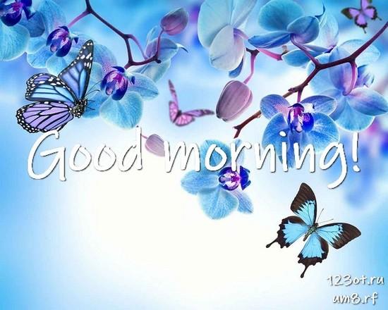 Прекрасного утра, красивая открытка, картинка с цветочками (цветы) для женщины, для жены скачать бесплатно! скачать открытку бесплатно | 123ot