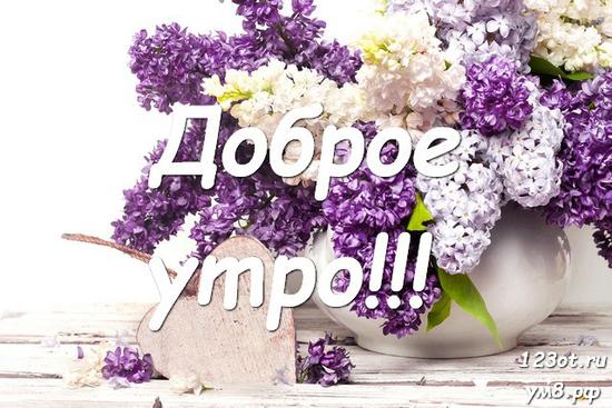 Прекрасного утра, красивая открытка, картинка с природой, с цветами девушке, женщине отправить на вацап! скачать открытку бесплатно | 123ot
