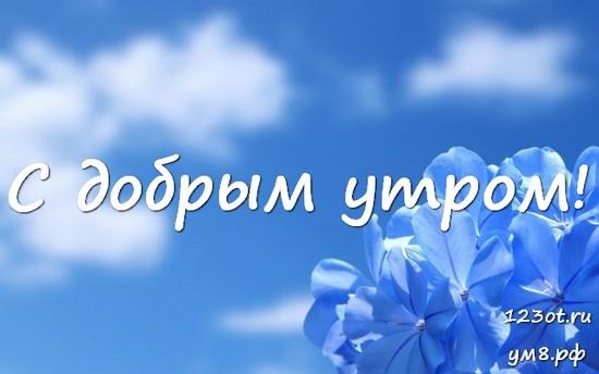 С добрым утром, красивая картинка, фотография с цветочками (цветы) девушке, женщине отправить на вацап! скачать открытку бесплатно | 123ot