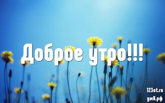 С добрым утром, красивая картинка, фотография с цветочками (цветы) для девушки, женщины скачать! скачать открытку бесплатно | 123ot
