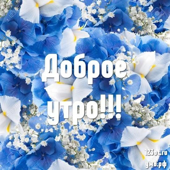 С добрым утром, красивая картинка, фотография с красивыми цветами для девушки, женщины скачать! скачать открытку бесплатно   123ot