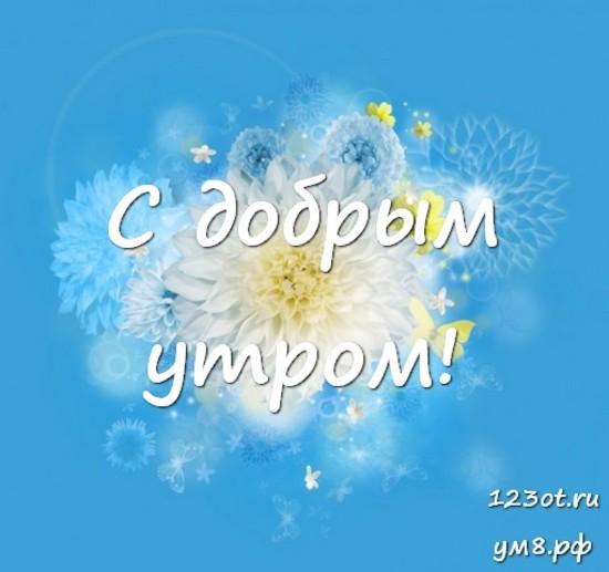 С добрым утром, красивая картинка, фотография с красивыми цветами женщине, жене скачать онлайн! скачать открытку бесплатно   123ot