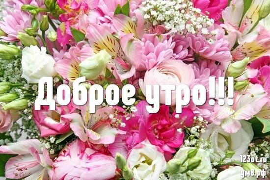 С добрым утром, красивая картинка, фотография с природой, с цветами для девушки, женщины скачать! скачать открытку бесплатно | 123ot