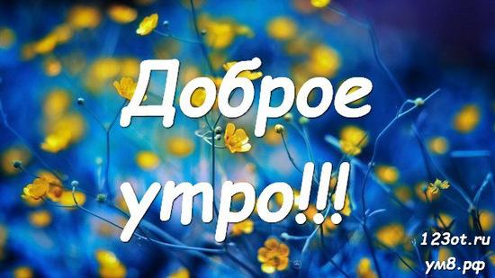 С добрым утром, красивая открытка, картинка с цветами девушке, женщине отправить на вацап! скачать открытку бесплатно | 123ot