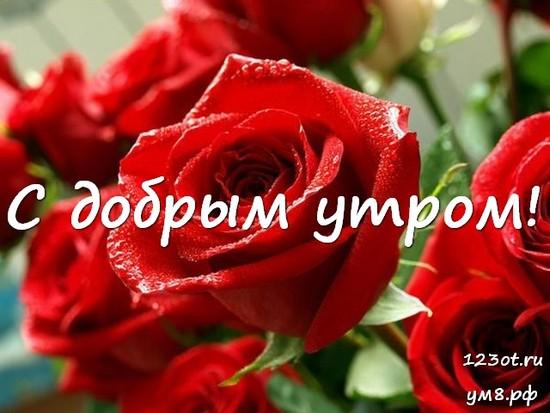 С добрым утром, красивая открытка, картинка с цветочками (цветы) девушке, женщине отправить на вацап! скачать открытку бесплатно   123ot