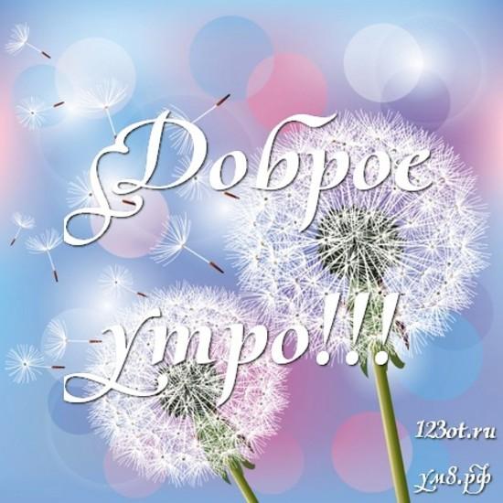 С добрым утром, красивая открытка, картинка с цветочками (цветы) девушке, женщине отправить на вацап! скачать открытку бесплатно | 123ot