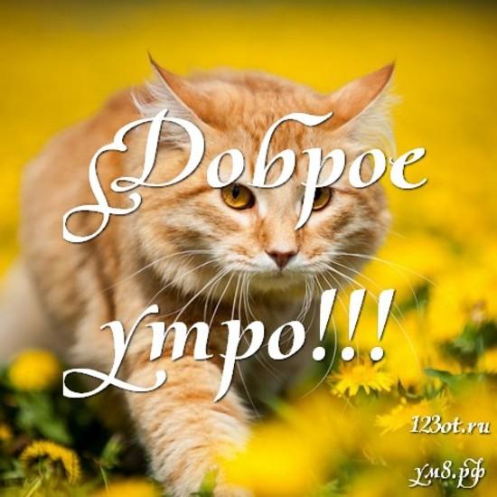 С добрым утром, красивая открытка, картинка с красивыми цветами для женщины, для жены скачать бесплатно! скачать открытку бесплатно   123ot