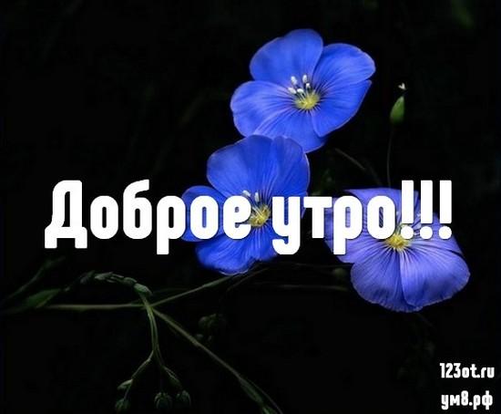 С добрым утром, красивая открытка, картинка с красивыми цветами женщине, жене скачать онлайн! скачать открытку бесплатно | 123ot