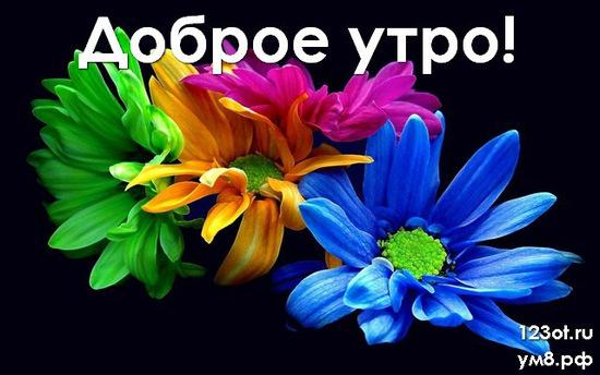 С добрым утром, красивая открытка, картинка с природой, с цветами женщине, жене скачать онлайн! скачать открытку бесплатно | 123ot