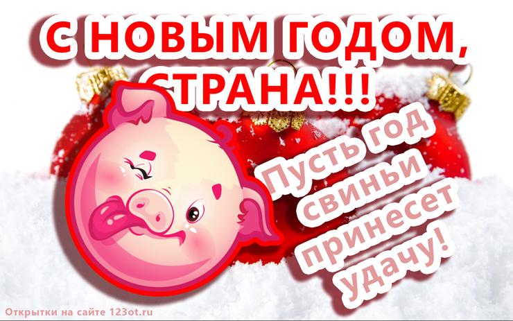 Новые живые открытки, картинки с новым годом свиньи 2019! Год кабана! Свиньи, поросята, маленькие свинки! Картинка со свиньей, поросенком, свинкой! Красивое пожелание своими словами к празднику! (Поздравление, ммс, смс, короткое сообщение для вацап, вайбер, телеграм! Скачать открытку онлайн для вк, одноклассники, фейсбук!) скачать открытку бесплатно | 123ot
