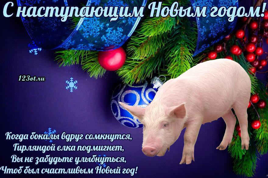 Новогодние картинки поздравление со свиньей, открытки
